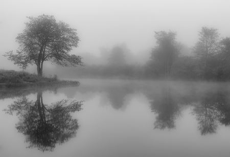 Steve Gingold Foggy Owens Pond