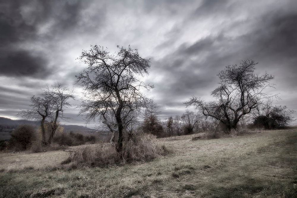 field with barren trees and storm clouds and mountains in distance