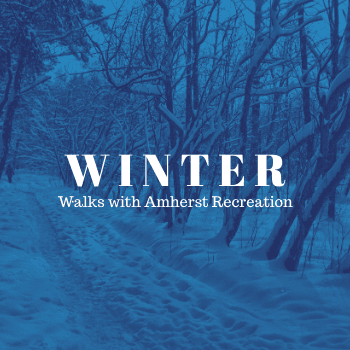 Text: Winter Walks with Amherst Recreation, snowy path with trees in background