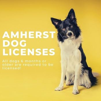 Black and white dog in front of yellow background, text: Amherst Dog Licenses